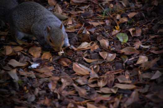 Eichhörnchen_York
