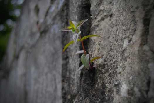 Pflanze an Steinwand